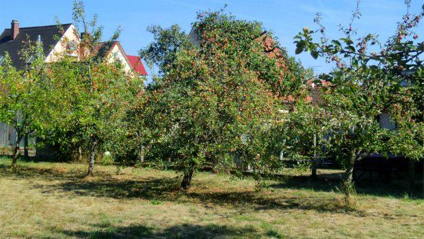 Garten von Tante Gunda